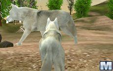 Wild Wolves